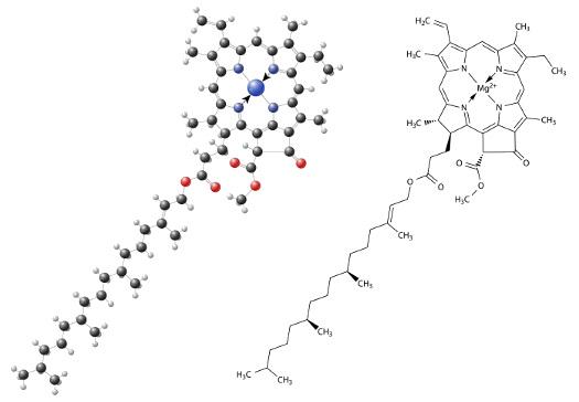 A clorofila a é encontrada em todos os organismos eucariontes fotossintetizantes