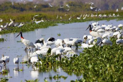 O grupo de todos os seres vivos existentes em uma área, como o Pantanal, é chamado de comunidade