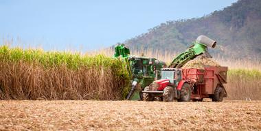 Colheita de cana-de-açúcar na Austrália
