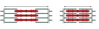 Observe que a contração muscular se baseia no deslizamento de filamentos grossos e finos