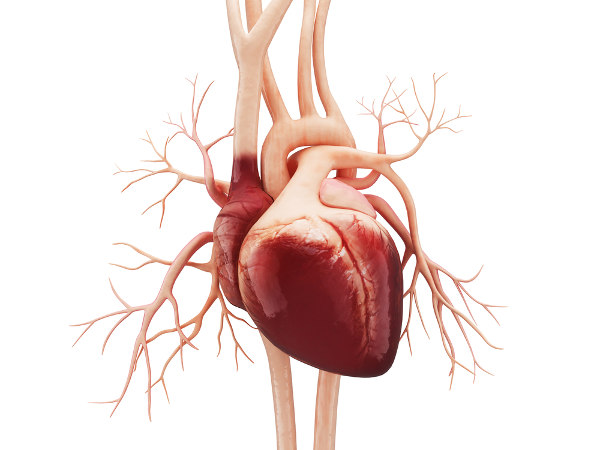 O coração é o órgão do sistema cardiovascular que garante o bombeamento do sangue para diversas partes do corpo.