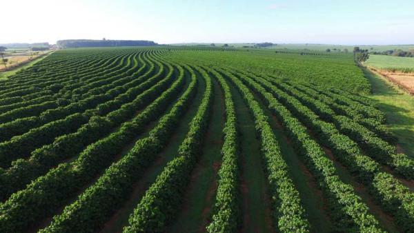 A produção cafeeira no Brasil concentra-se nos estados do Rio de Janeiro e de São Paulo.