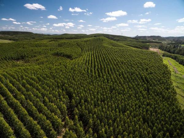 A produção de eucalipto no Brasil concentra-se nas regiões Sudeste, Nordeste e Centro-Oeste.