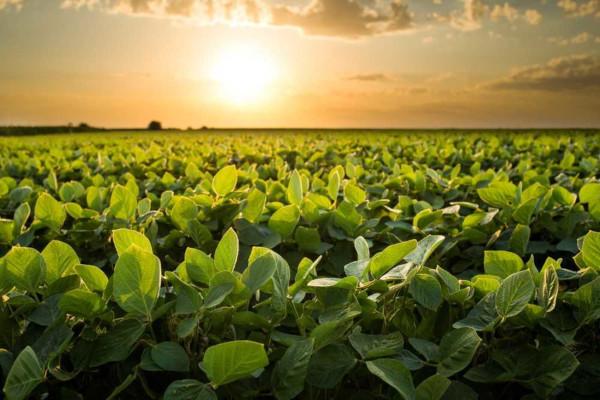 O Brasil é o segundo maior produtor e o maior exportador de soja do mundo.