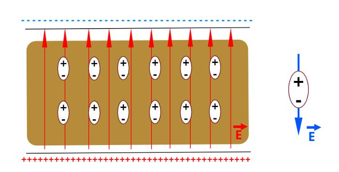 O campo elétrico externo polariza o meio dielétrico.