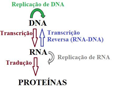 Esquema atual do Dogma Central da Biologia Molecular demonstrando o fluxo da informação genética