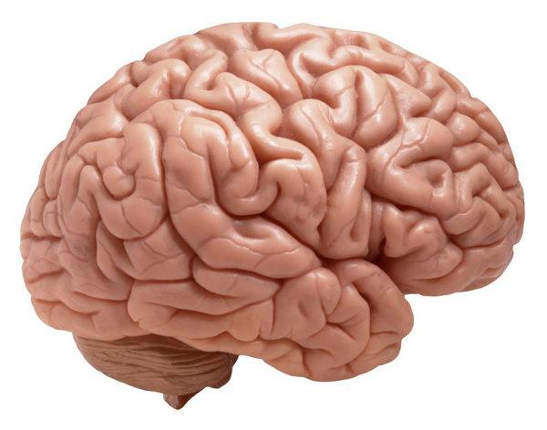 O encéfalo é uma das partes do sistema nervoso. O cérebro é uma parte do encéfalo.
