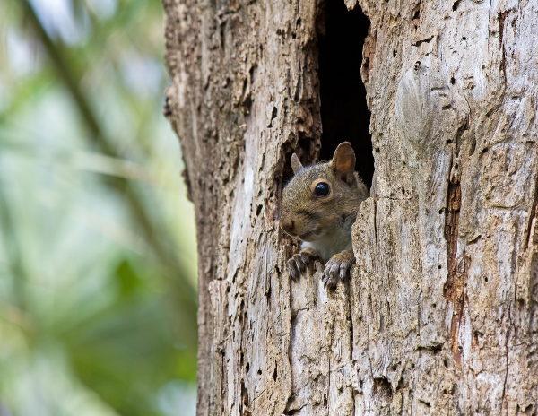 As árvores servem de moradia para várias espécies de animais.