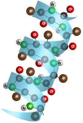 A estrutura de uma proteína é formada pela ligação peptídica entre aminoácidos