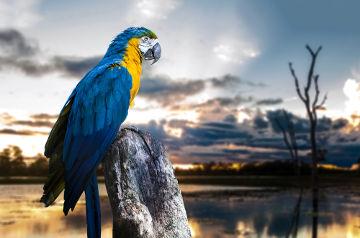 Arara-canindé, uma espécie muito comum na Amazônia Brasileira