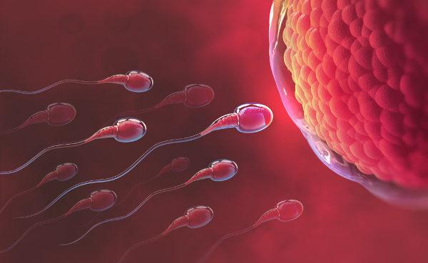 Os processos de formação dos gametas masculino e feminino apresentam algumas diferenças.