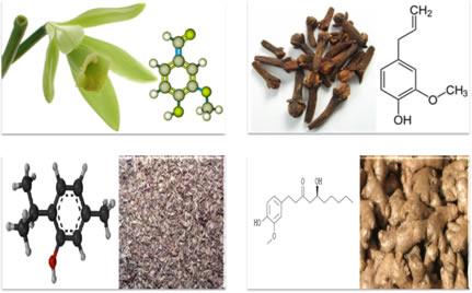 Exemplos de fenóis em vegetais