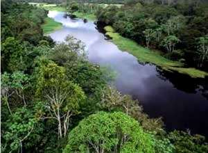 Resultado de imagem para floresta sul americanas