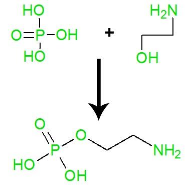 Equação de formação da fosfoetanolamina