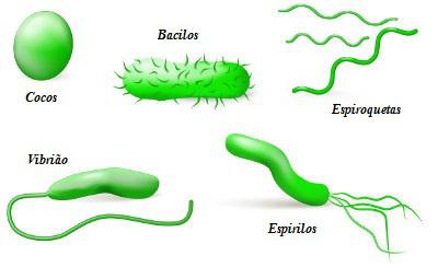 Observe as principais morfologias verificadas em bactérias