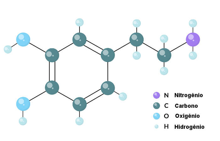 A dopamina é uma catecolamina, ou seja, é formada por um catecol unido a uma amina por uma ponte etil.