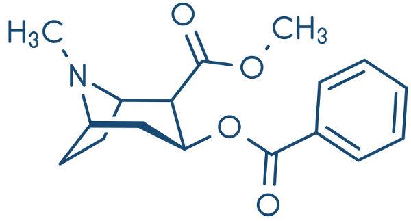 A cocaína é um alcaloide oxigenado.