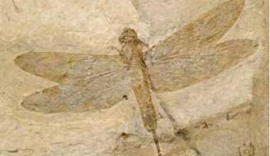 Exemplo de um fóssil