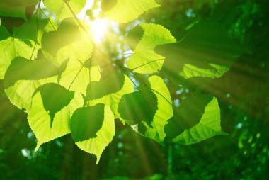 A fotossíntese é uma reação química que ocorre com absorção de calor