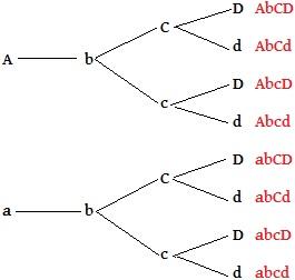 Observe os gametas formados por um indivíduo com genótipo AabbCcDd