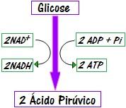 Observe um esquema resumido da glicólise
