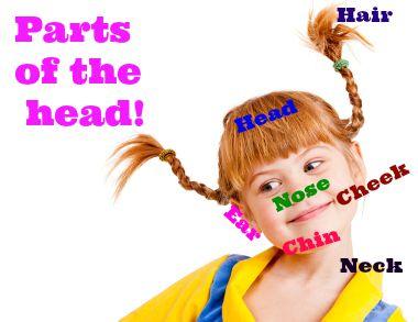 Partes da cabeça em inglês