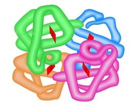 A hemoglobina é uma proteína em estrutura quartenária