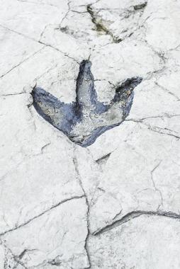 Icnofóssil com marcas de pegadas de dinossauro