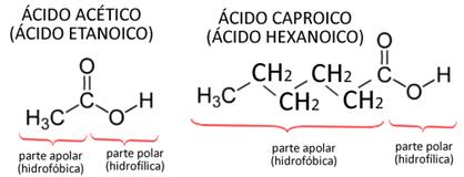 Imagens de estruturas de ácido acético e caproico