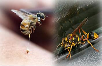 O veneno do ferrão da abelha é um ácido; e o da vespa é uma base