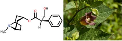 Fórmula da atropina e Atropa belladonna