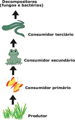 Representação de uma cadeia alimentar de terra firme, lembrando que os decompositores atuam em todos os níveis da cadeia