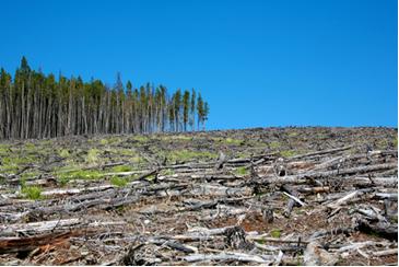 O desmatamento é o maior fator de emissão de gases-estufa no Brasil