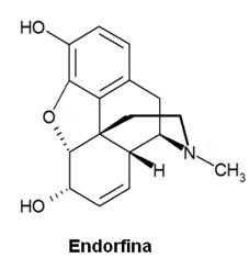 A endorfina é liberada pelo toque, dando sensação e prazer