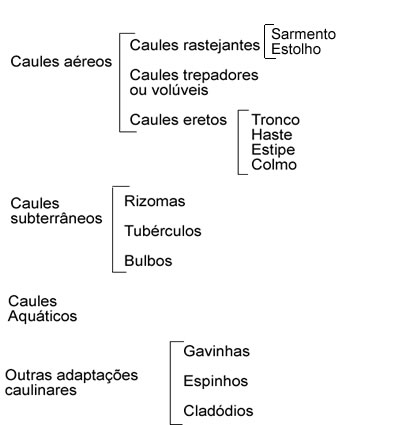 Tipos de caule. Tipos de caule e suas características - Mundo Educação 02c836ed7a