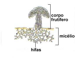 Drogas de um fungo de pele de medicina