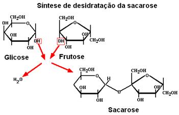Síntese de formação da sacarose.