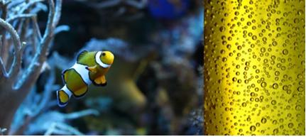 A água do aquário e o refrigerante são exemplo de soluções contendo gás dissolvido em líquido