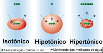 Efeitos das pressões osmóticas nas hemácias