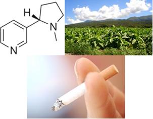 Fórmula da nicotina, plantação de tabaco e cigarro