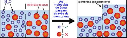 Esquema de osmose entre duas soluções