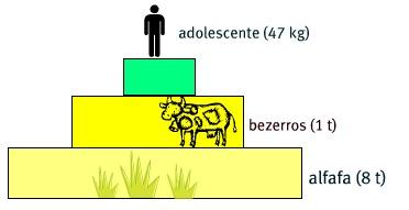 Pirâmide de biomassa