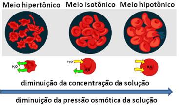 Esquema de influência da pressão osmótica no sangue