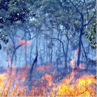 As queimadas lançam gases-estufa na atmosfera