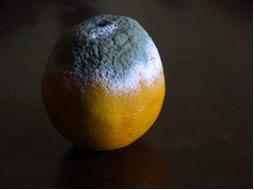 A decomposição da laranja é uma reação moderada