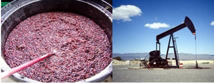 A fermentação do suco de uva e a formação do petróleo são exemplos de reações de velocidade lenta