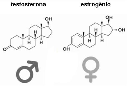 Fórmulas estruturais da testosterona e do estrogênio