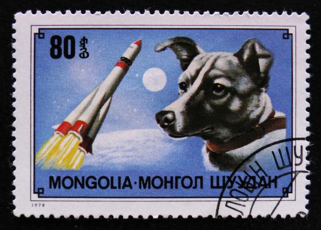 A cadela Laika foi enviada para o espaço com a Sputnik 2 e faleceu dias depois pelo superaquecimento da nave.
