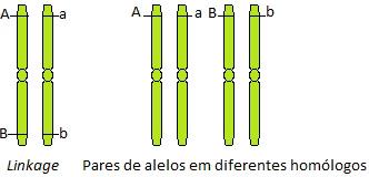 Os genes estão em linkage quando se apresentam no mesmo cromossomo