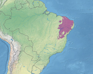Mapa do domínio morfoclimático da Caatinga ¹
